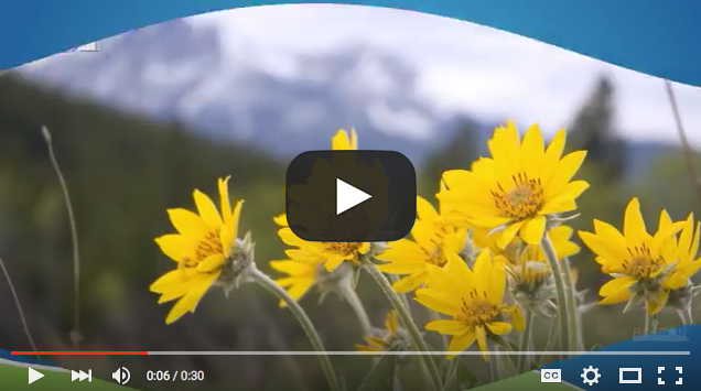 Arnica Benefits Video