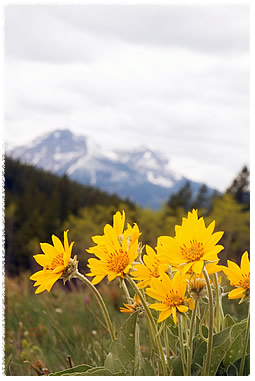 arnica montana | homeopathic medicine for muscle aches & stiffness, Skeleton