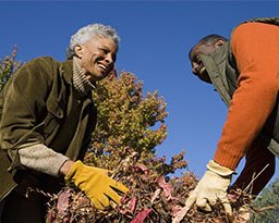 Mature couple bagging fall leaves