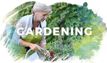 Gardening - mature woman watering tomato plants