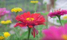 gardening-mishaps